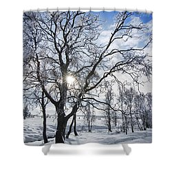 Shower Curtain featuring the photograph 130201p341 by Arterra Picture Library