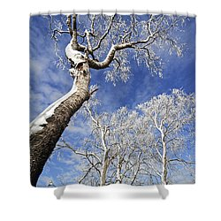 Shower Curtain featuring the photograph 130201p343 by Arterra Picture Library
