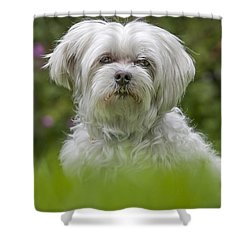 130918p024 Shower Curtain by Arterra Picture Library