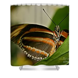 Shower Curtain featuring the photograph Butterfly by Olga Hamilton