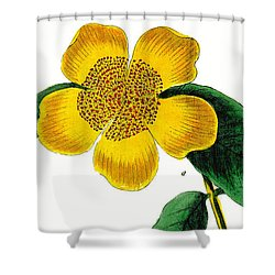1788 Flower Drawing Restored Shower Curtain