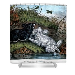 1860s Two Spaniel Dogs Flushing Shower Curtain