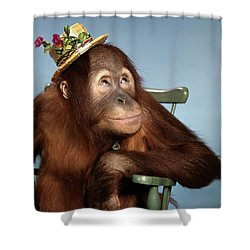1960s Orangutan Pongo Pygmaeus Sitting Shower Curtain