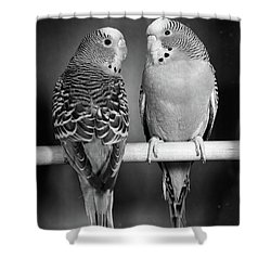 1960s Pair Of Parakeets Perched Shower Curtain