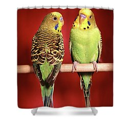 1960s Pair Of Two Yellow Green Shower Curtain