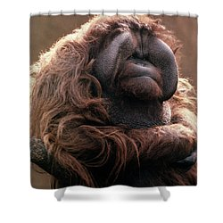 1970s Mature Adult Orangutan Pongo Shower Curtain