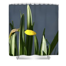 Shower Curtain featuring the photograph 1st Daff by Joe Schofield
