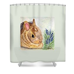 Shower Curtain featuring the painting A Baby Bunny by Angela Davies