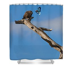 A Confrontation Shower Curtain