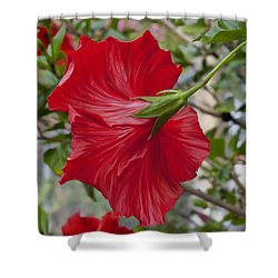 Abstract Hibiscus Shower Curtain