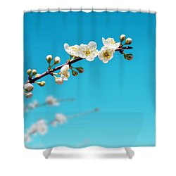 Almond Branch Shower Curtain by Carlos Caetano