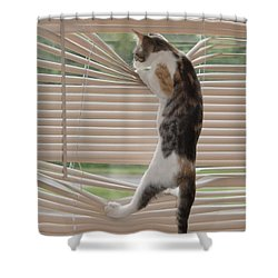 Ana Lucia Levelor Shower Curtain