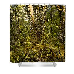 Ancient Woods Shower Curtain by Tim Hester