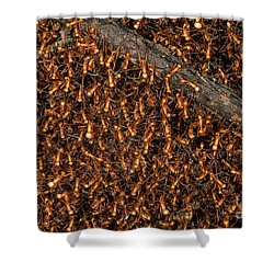 Army Ant Bivouac Site Shower Curtain by Gregory G. Dimijian, M.D.