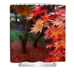 Autumnal Forest Shower Curtain by Les Cunliffe