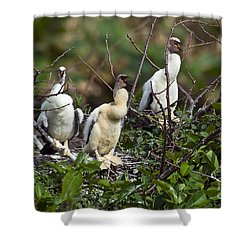 Baby Anhinga Shower Curtain by Mark Newman