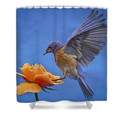 Balancing Act Shower Curtain by Jean Noren