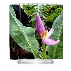 Banana Flower  Shower Curtain by Lanjee Chee