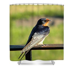 Shower Curtain featuring the photograph Barn Swallow by James Petersen