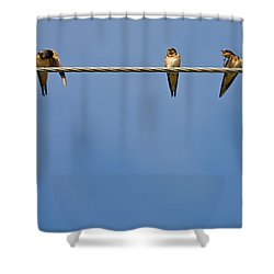 Barn Swallows Shower Curtain by Melinda Fawver