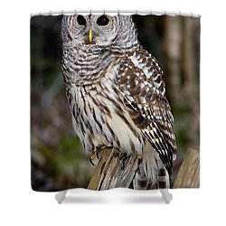 Shower Curtain featuring the photograph Barred Owl by Les Palenik