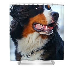 Beautiful Dog Portrait Shower Curtain