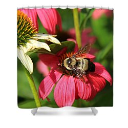 Bee Nice Shower Curtain by Reid Callaway