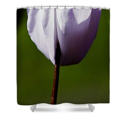 Before The Bloom Shower Curtain by David Patterson