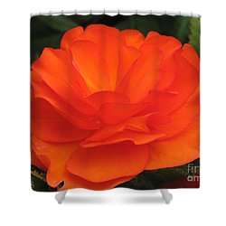 Shower Curtain featuring the photograph Begonia Named Nonstop Apricot by J McCombie