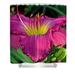 Shower Curtain featuring the photograph Bela Lugosi Daylily by Suzanne Stout