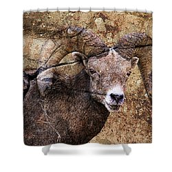 Bighorn Rock Shower Curtain