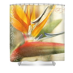 Bird Of Paradise - Strelitzea Reginae - Tropical Flowers Of Hawaii Shower Curtain
