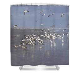 Birds At The Beach Shower Curtain