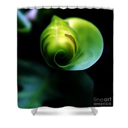Shower Curtain featuring the photograph Birth Of A Leaf by Lilliana Mendez