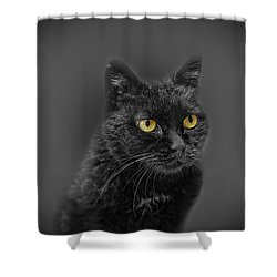 Black Cat Shower Curtain by Peter Lakomy