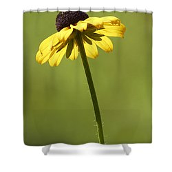 Black-eyed Susan Shower Curtain by Tony Cordoza