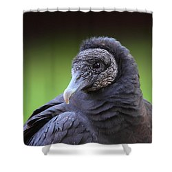 Black Vulture Portrait Shower Curtain