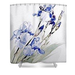 Blue Irises Shower Curtain