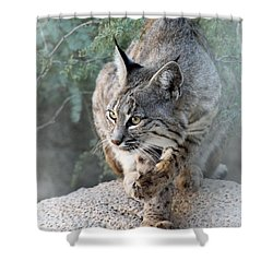 I Was Grooming Shower Curtain by Elaine Malott