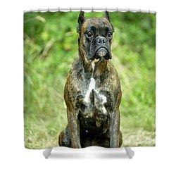 Boxer Dog Shower Curtain by Jean-Michel Labat