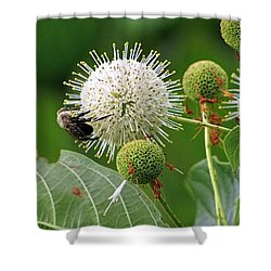 Bumbler Shower Curtain
