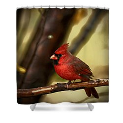 Cardinal Pose Shower Curtain by Karol Livote