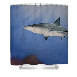 Caribbean Reef Shark 1 Shower Curtain by Jeff Lucas