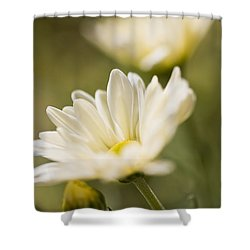 Chrysanthemum Flowers Shower Curtain