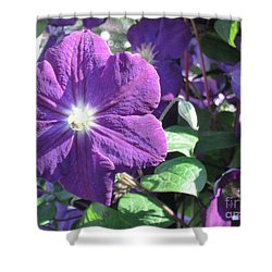 Clematis With Blazing Center Shower Curtain