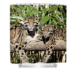 Clouded Leopards Shower Curtain