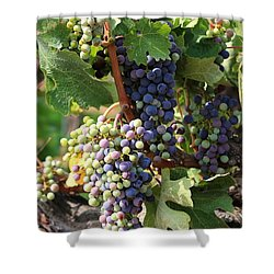 Colorful Grapes Shower Curtain by Carol Groenen