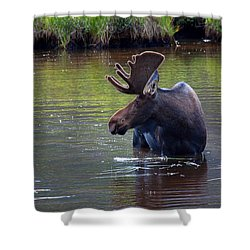 Cooling Off Shower Curtain by Jim Garrison