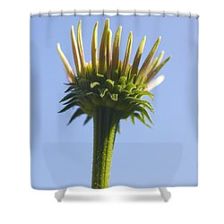 Cornflower Shower Curtain by Tony Cordoza