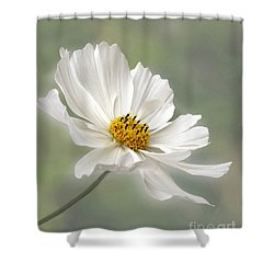 Cosmos Flower In White Shower Curtain